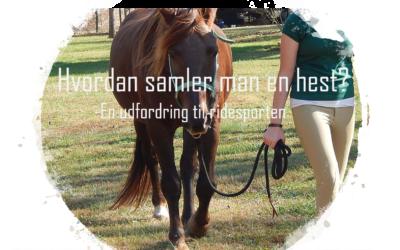 Hvordan samler man en hest?